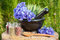 Stock Image : Black mortar with blue cornflowers, sage, wooden spoon and glass