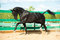 Stock Image : Black Russian trotter horse portrait in motion in paddock