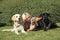 Stock Image : Blond kobieta i trzy psa przy gazonem.