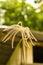 Stock Image : BLOOMING SWOLLEN FINGER GRASS