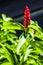Stock Image : Blossom red flower