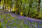 Stock Image : Bluebell slope