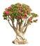 Stock Image : Bonsai tree