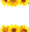 Stock Image : Border with sunflowers