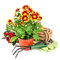 Stock Image : Bouquet flower in pot with garden tools