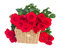 Bouquet of scarlet roses with basket