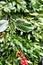 Stock Image : Boxwood wreath