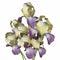 Stock Image : Bucket With Iris Flowers