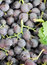 Stock Image : Bunch of black grapes