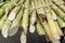 Stock Image : Bundles of bamboos
