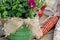 Stock Image : Burlap bow on mum basket