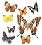 Stock Image : Butterfly collection
