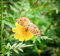 Stock Image : Butterfly and flowers