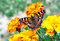Stock Image : Butterfly on flowers