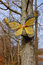 Stock Image : Butterfly Garden Decoration