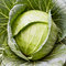 Stock Image : Cabbage