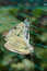 Stock Image : Cabbage white butterflies