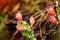 Stock Image : Cactus