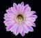Stock Image : Cactus Blossom