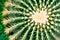 Stock Image : Cactus close-up. Succulent plant detail.