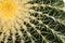 Stock Image : Cactus Closeup