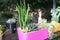 Stock Image : Cactus family plants in pot