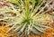 Stock Image : Cactus flower