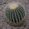 Cactus with long needles