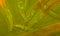 Stock Image : Caenorhabditis elegans