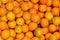 Stock Image : Calamondin orange