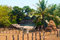 Stock Image : Cambodian farm