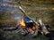 Stock Image : Campfire