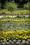 Stock Image :  Canteiros de flores no jardim do castelo