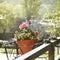 Stock Image : Carnation flowers