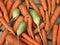 Stock Image : Carrot and radish