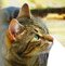 Stock Image : Cat