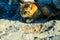 Stock Image : Cat On The Rocks