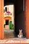 Stock Image : Cat standing at the door
