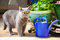 Stock Image : Cat standing near the blue watering-pot