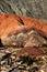 Stock Image : Cerro de siete colores in northwest Argentina