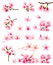 Stock Image : Cherry blossom collection