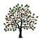 Stock Image : Cherry tree