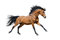 Stock Image : Chestnut stallion in motion