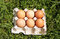 Stock Image : Chicken eggs on grass