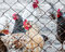 Stock Image : Chickens on poultry farm
