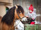 Stock Image : Child feeding a horse in winter