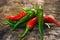 Stock Image : Chili Pepper