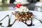 Stock Image : Chocolate and macadamia brownie