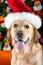 Stock Image : Christhmas dog labrador retriever