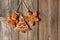 Stock Image : Christmas homemade gingerbread cookies